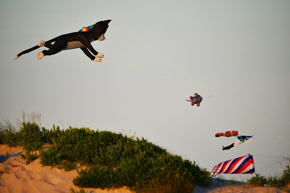 Kites at Chincoteague