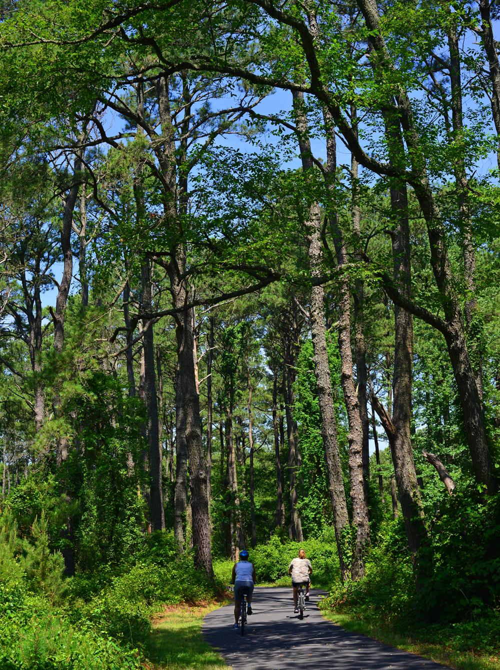 Chincoteague Woodland Trail