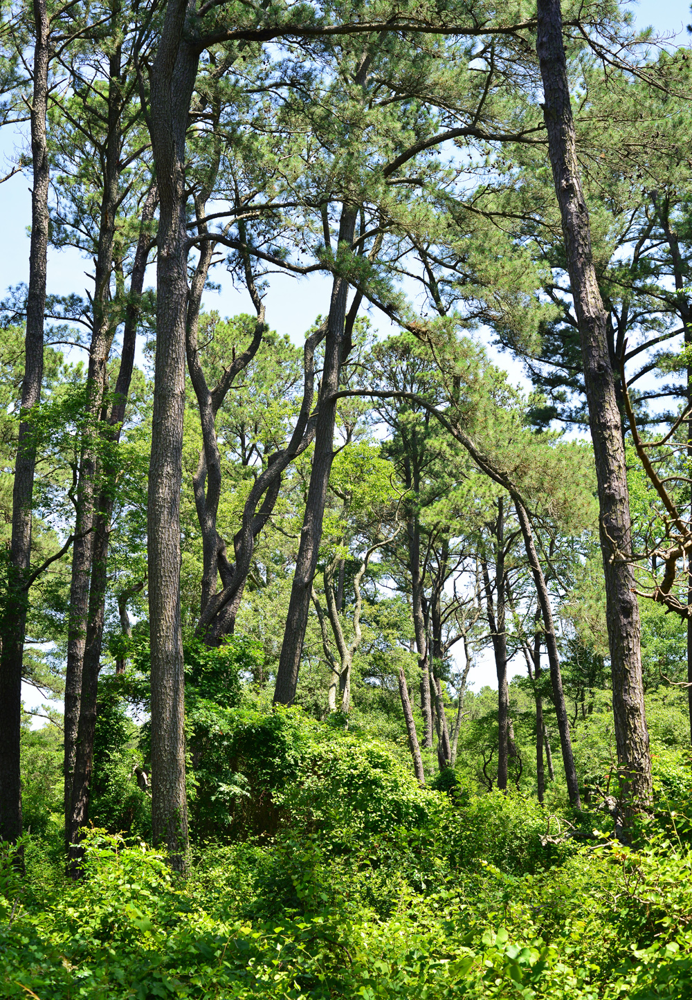 Trees of the Woodland Trail