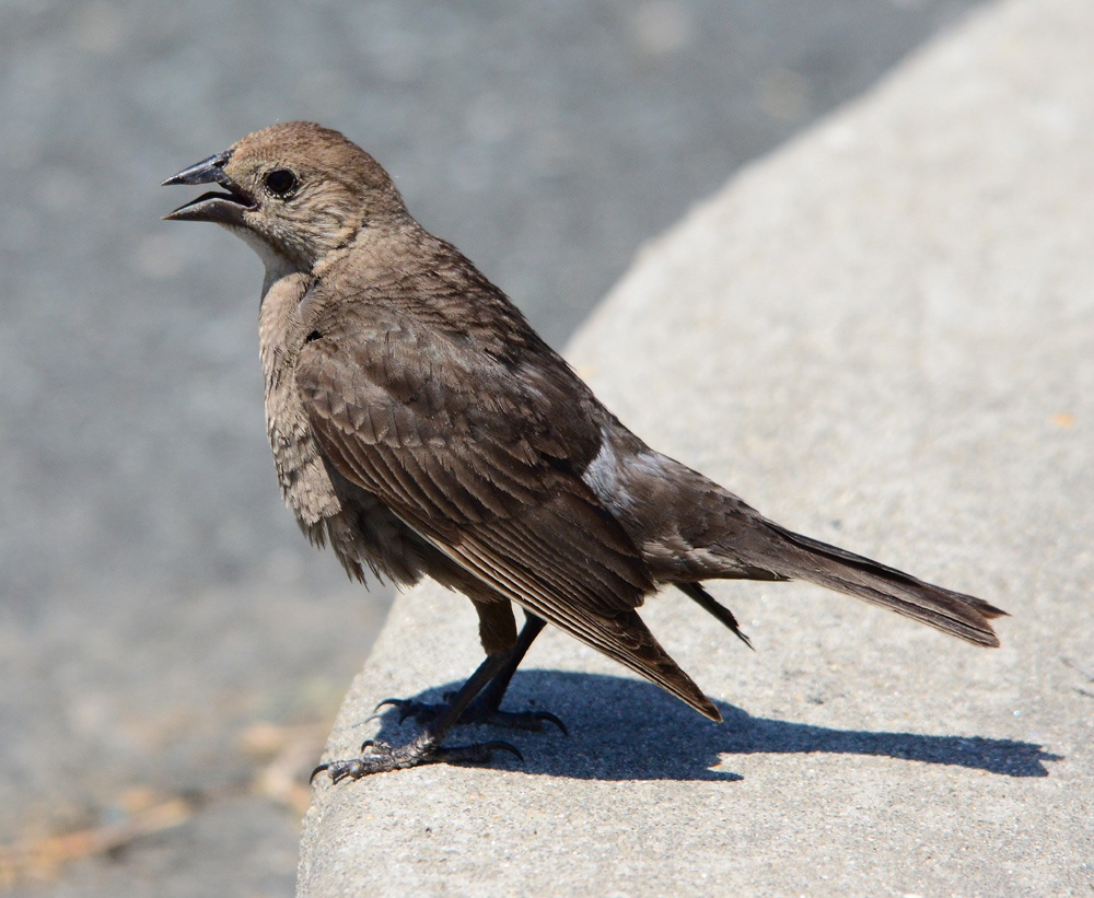 Juvenile awaiting food