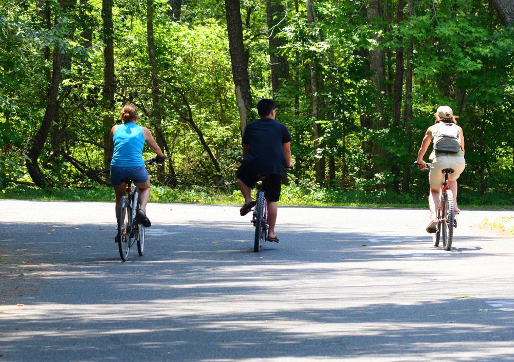 Woodland Biking