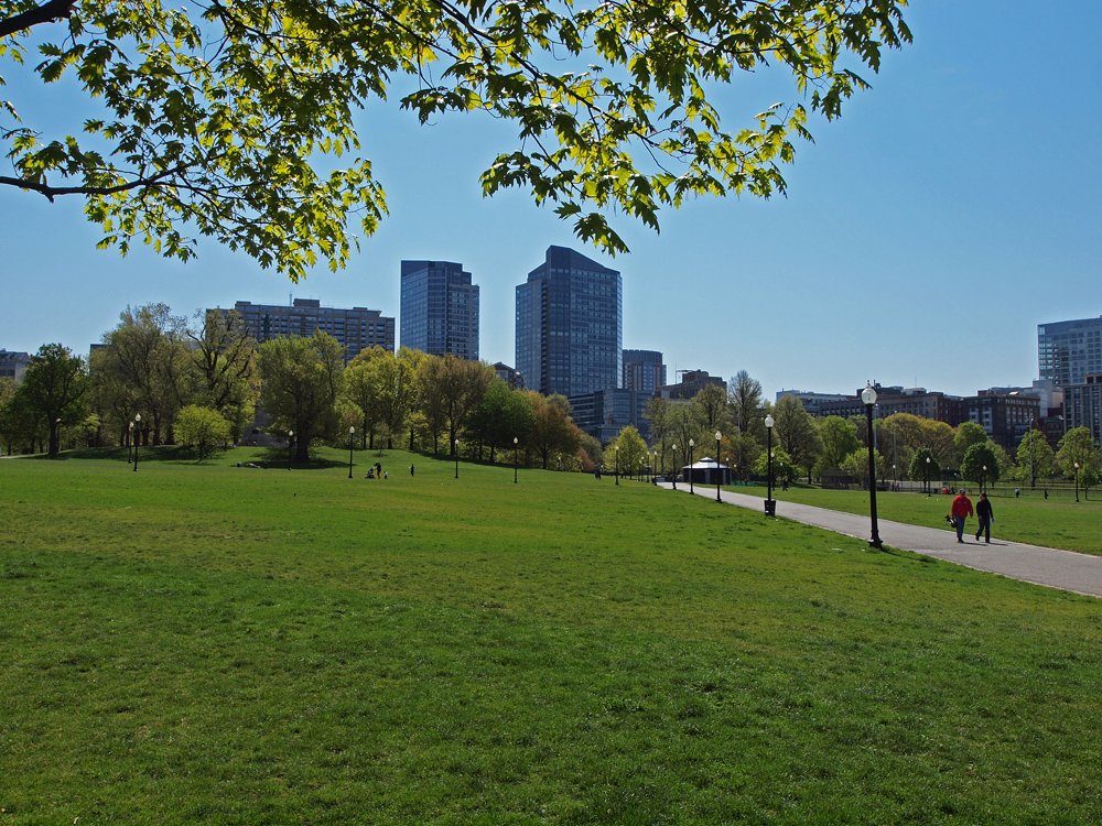 Boston Common lawn