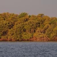 Mosquito lagoon Olympus - Nikon Imaging