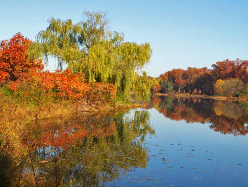 Lake  Artemesia in  fall color