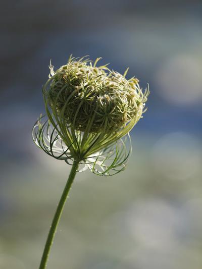 Flower in soft light