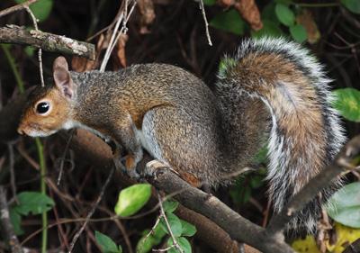 Squirrel resting on branch