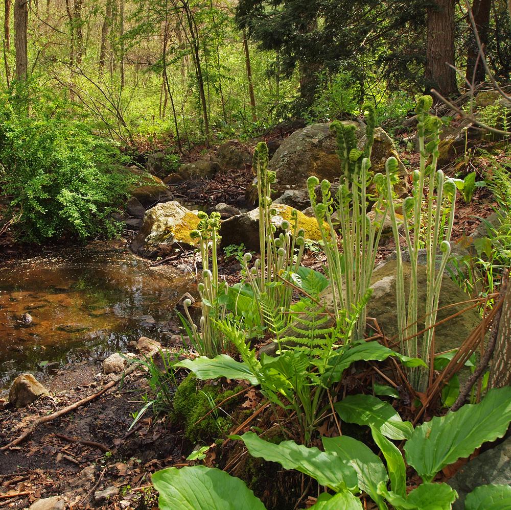 Lichen and Fern
