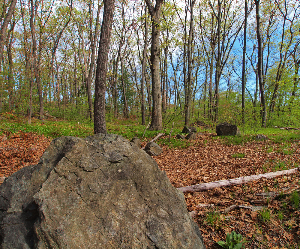 Large rock and oaks to background