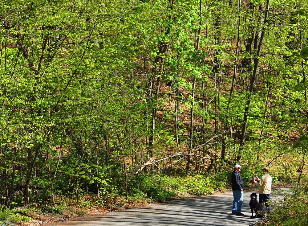 prospect Hill Main road trail
