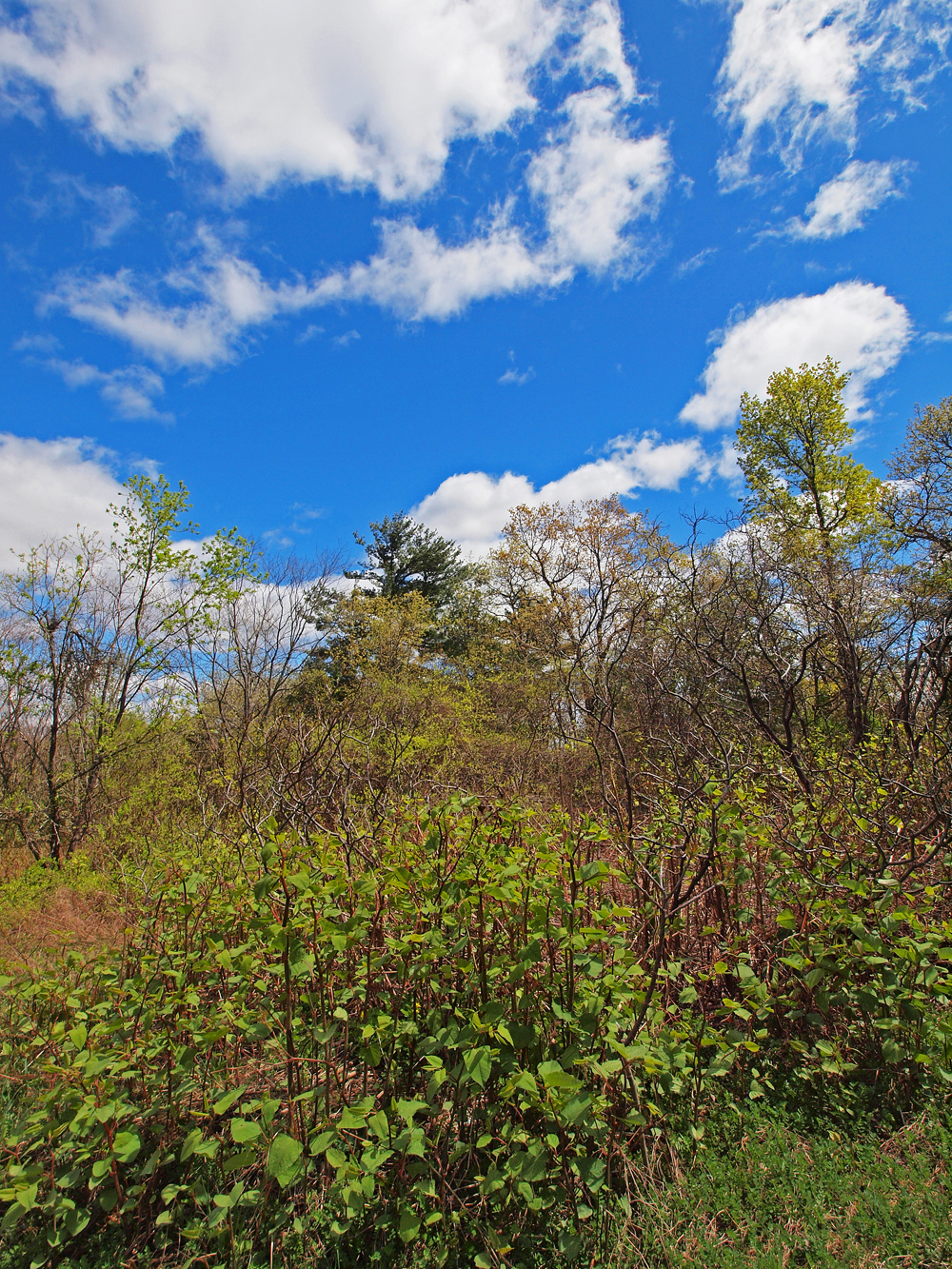 Prospect Hill Flora