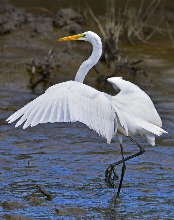 Egret in ballet pose; Panel 1 No 5