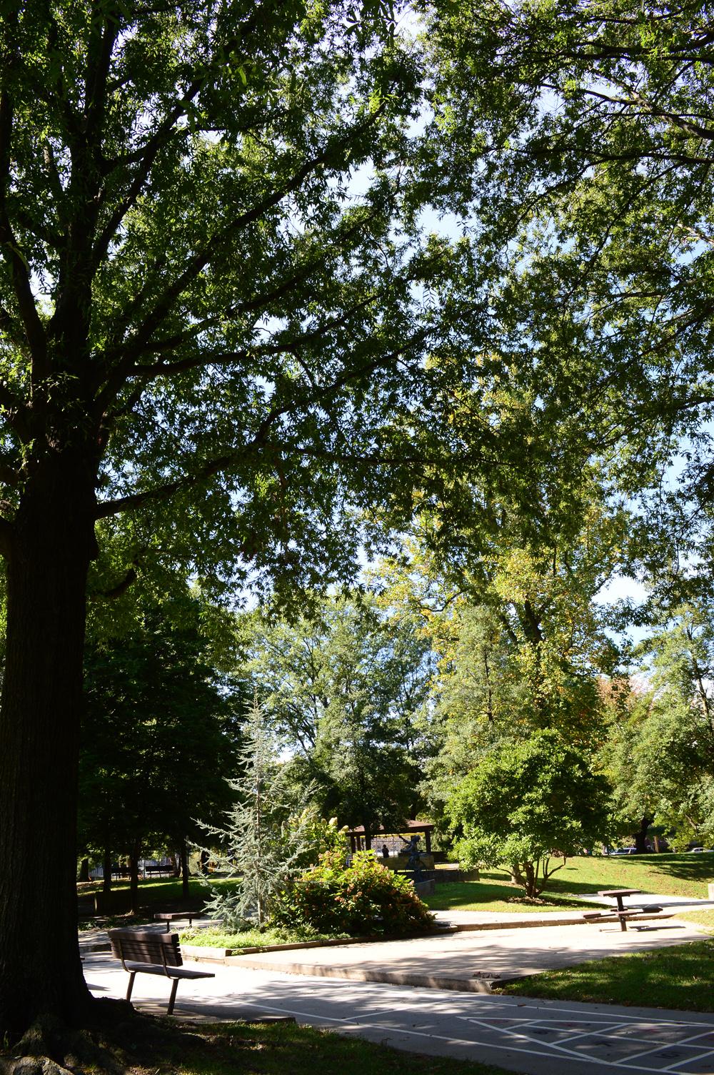A Great old oak tree of woodside.
