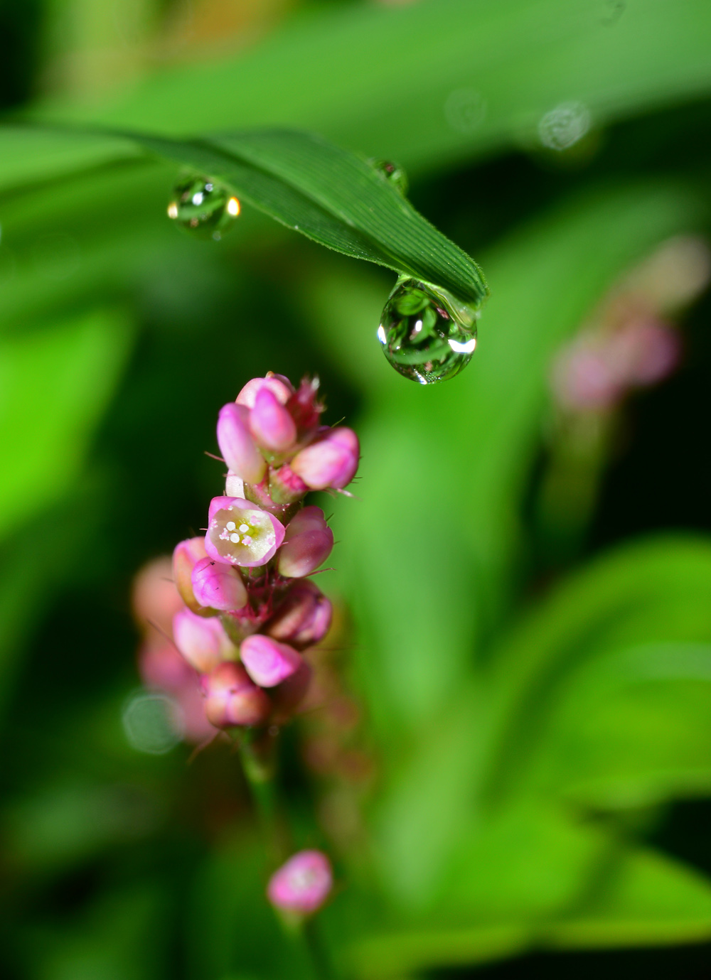 Weed flower with dew drop